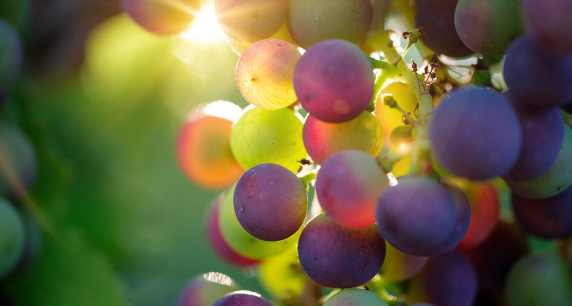 UEEL raisins au soleil